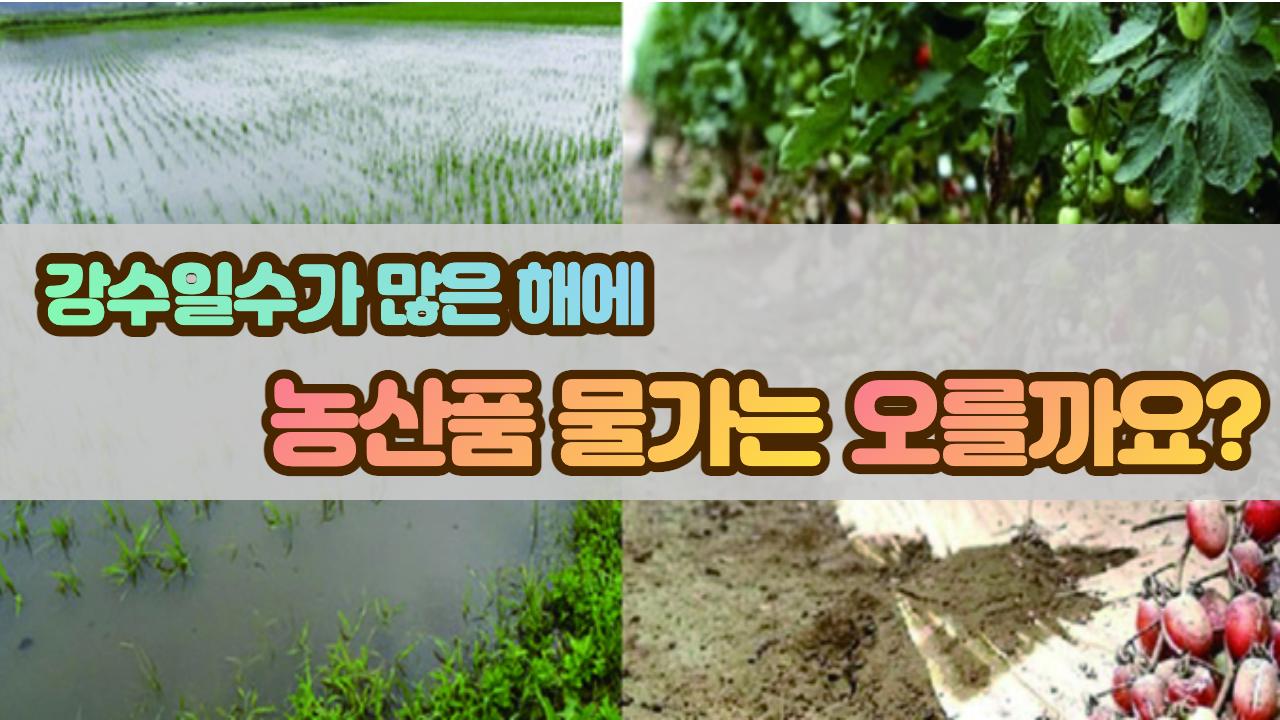 강수일수 많은 해에는 농산물 가격이 많이 올라갈까?